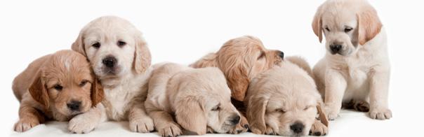 Pac Collars dog training guide - PAC Collars