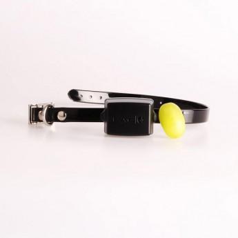 pacdog exc6 collar